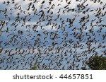 birds  flock of birds | Shutterstock . vector #44657851