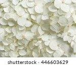 Stock photo white hydrangea flowers tender romantic floral background 446603629