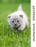 Stock photo white kitten on the grass selective focus 44666149
