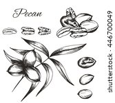 vector sketch of pecan plant... | Shutterstock .eps vector #446700049