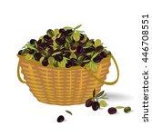 Olive Basket. Olive Harvest....