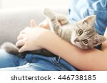 Stock photo child with kitten on grey sofa at home 446738185