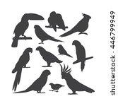 Cartoon Parrots Birds And...