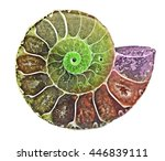 Close Up Of Ammonite Fossil