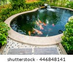 Koi fish in pond in the garden