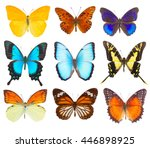 set of multicolored tropical... | Shutterstock . vector #446898925