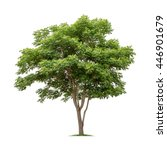 isolated tree on white... | Shutterstock . vector #446901679