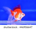 goldfish | Shutterstock . vector #446906647
