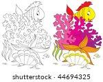 Fish  Coral  Starfish And Shell