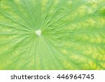 close up detail of the center... | Shutterstock . vector #446964745
