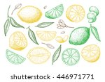 vector hand drawn lemon set.... | Shutterstock .eps vector #446971771