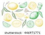 vector hand drawn lemon set.... | Shutterstock .eps vector #446971771