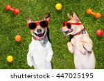 Stock photo couple of dogs funny and laughing on grass or meadow in park with pet toys all over on 447025195