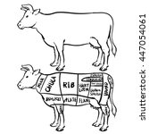 cow cuts diagram and butchery... | Shutterstock .eps vector #447054061