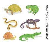 reptiles and amphibians... | Shutterstock .eps vector #447127909