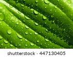 Green Leaf In Drop.