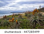 Orange Aloes And Plants Growin...