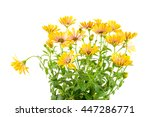 closeup of isolated yellow...   Shutterstock . vector #447286771