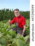 Small photo of Farmer or agronomist examine tobacco plant field using tablet