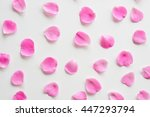 Stock photo a collection of pink rose petals on a white background set of elegant flower petals top view 447293794