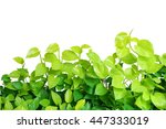 heart shaped green yellow... | Shutterstock . vector #447333019