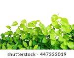 heart shaped green yellow... | Shutterstock . vector #447333019