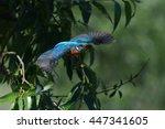 kingfisher  alcedo atthis ...   Shutterstock . vector #447341605