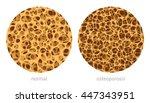 bone spongy structure vector... | Shutterstock .eps vector #447343951