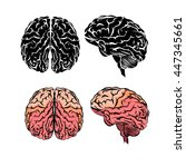 a set of brain. vector | Shutterstock .eps vector #447345661