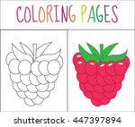coloring book page. raspberries.... | Shutterstock .eps vector #447397894