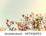 Small photo of Abloom magnolia flowers on sunny spring day with clear sky Large flowered tree in Magnoliaceae family blooming in springtime garden with pink petals against background, image vintage filter effect