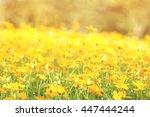 blurry flowers field in the... | Shutterstock . vector #447444244
