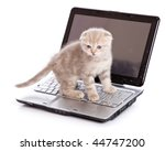 Stock photo small funny kitten on laptop isolated on white background 44747200
