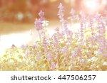 soft focus of summer flowers ... | Shutterstock . vector #447506257