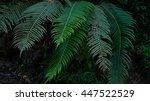 green fern leaves in forest | Shutterstock . vector #447522529