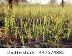 meadow summer flowers and herbs | Shutterstock . vector #447574885