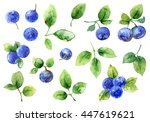 bilberry on white background.... | Shutterstock . vector #447619621