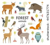 vector illustration of forest... | Shutterstock .eps vector #447631774