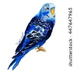 watercolour parrot. budgerigar | Shutterstock . vector #447647965