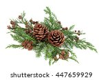 winter fauna greenery with... | Shutterstock . vector #447659929