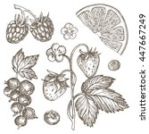 sketch ink hand drawn... | Shutterstock .eps vector #447667249