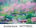 Cherry Blossom And Sakura At...