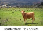 cows and bulls on pasture  lush ... | Shutterstock . vector #447778921