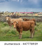 cows and bulls on pasture  lush ... | Shutterstock . vector #447778939