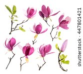 Stock photo collection of pink magnolia flowers isolated on white background 447801421