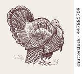 vector illustration   a bird... | Shutterstock .eps vector #447885709