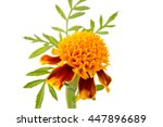 Flower Orange Marigold Isolate...