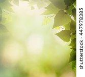 beauty seasonal backgrounds.... | Shutterstock . vector #447978385