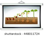 chart showing the growing of... | Shutterstock .eps vector #448011724