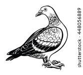 isolated pigeon  vector... | Shutterstock .eps vector #448056889
